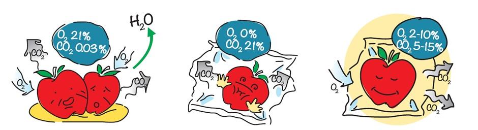نگاهی به فرایند زیستی میوه ها و سبزیجات پس از برداشت